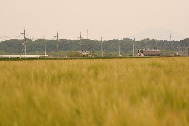 麦畑の両毛線
