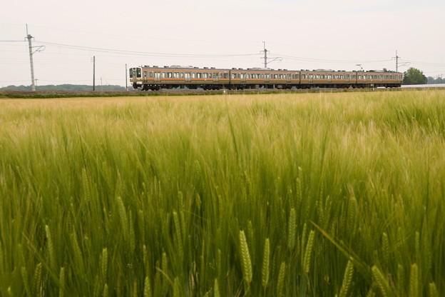 麦の穂実る両毛線を行く211系