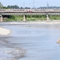 思川橋梁を行く東武6050系新栃木行き