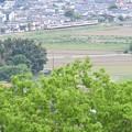 新緑の新鹿沼付近を行く東武日光線6050系