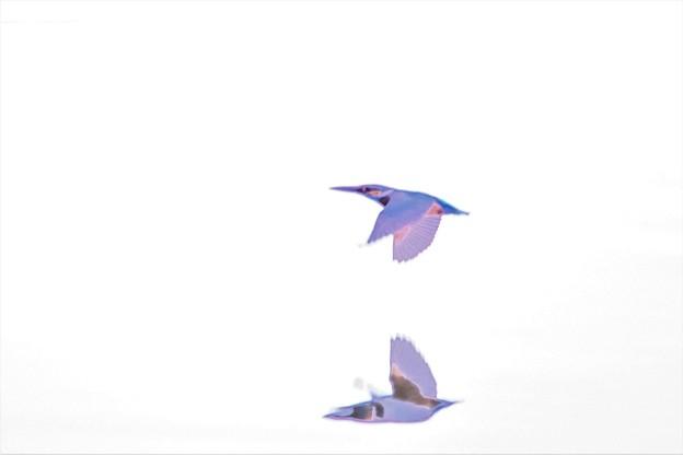 カワセミ飛翔(絵画風)
