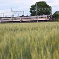 Photos: 麦実る東武日光線を行く6050系