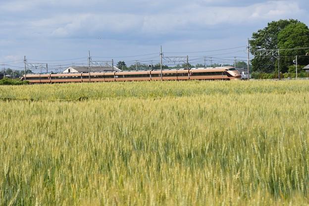 麦畑を行く金色スペーシア