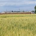 Photos: 麦畑を行く金色スペーシア