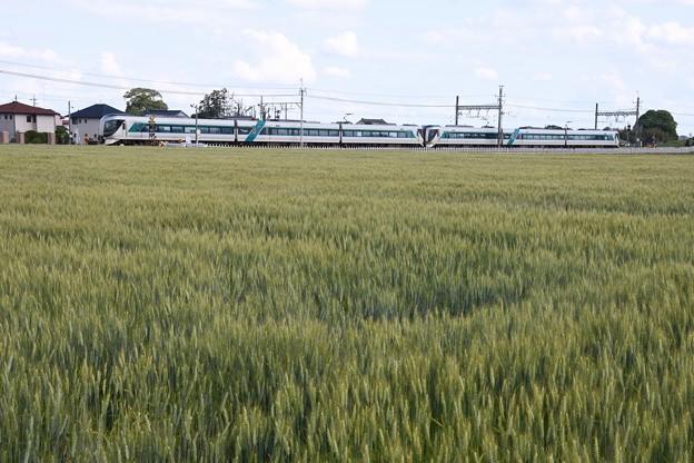 麦畑を行く東武500系リバティ