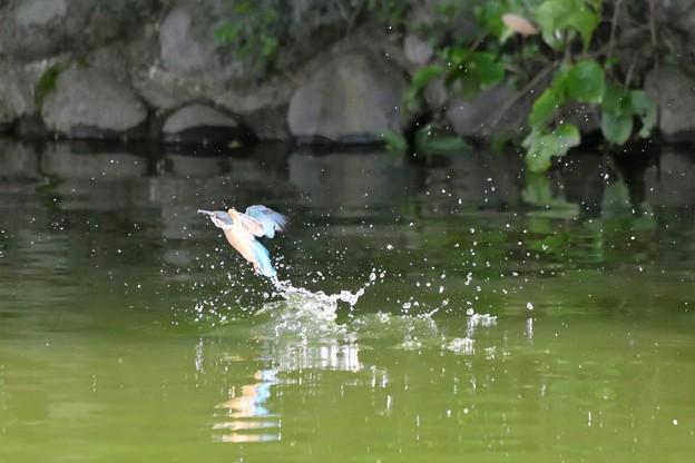 水面から飛び立ち