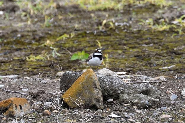 Photos: 巣の近くで見張り中