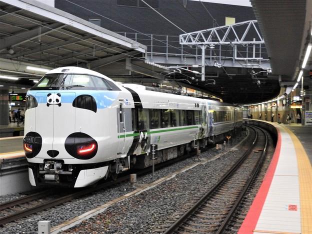 親子パンダくろしお25号新大阪3番入線