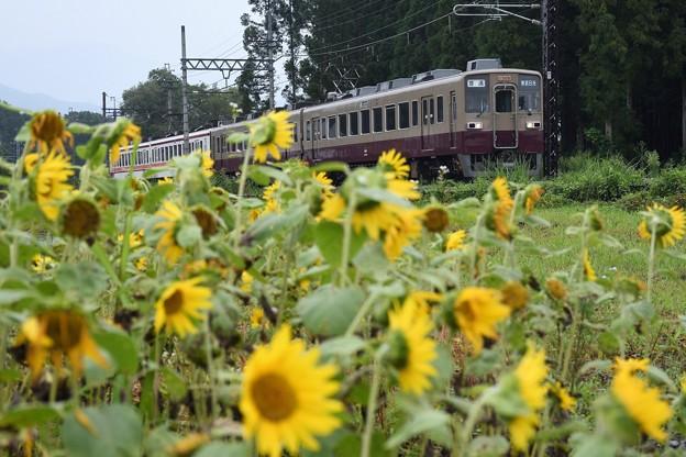 Photos: 東武6050系リバイバル色東武日光行き