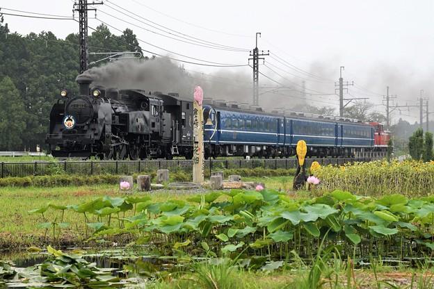 Photos: C11 207牽引SL大樹5号