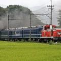 Photos: C11 207+12系+DE10 1099 SL大樹5号
