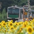烏山線ACCUMひまわり満開の小塙駅発車