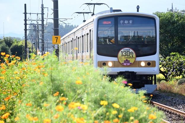 Photos: キバナ秋桜咲く日光線130周年記念いろは