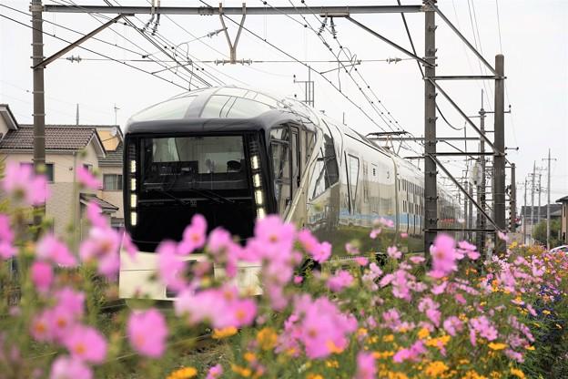 秋桜の宇都宮線を行く四季島