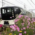 Photos: コスモス四季島