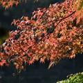 公園ボート池脇の紅葉♪