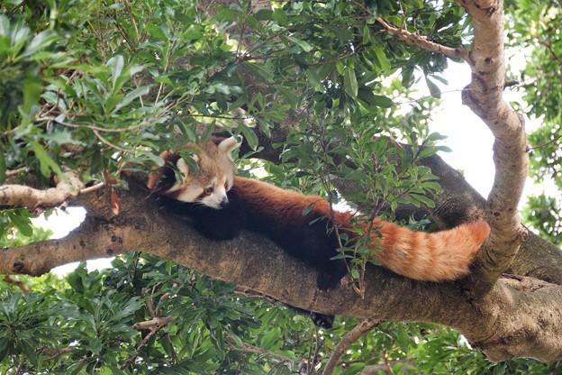 食事終えて木の上でのんびり