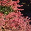 紅葉の大芦渓谷