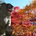 紅葉の古峯神社