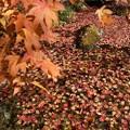 浮かぶ紅葉