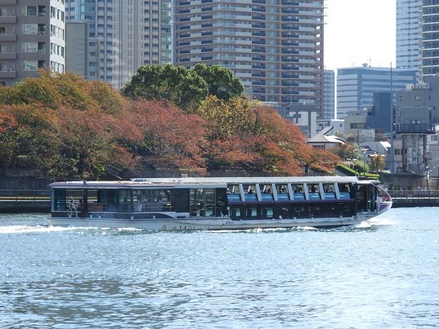 秋色の隅田川を行くTOKYO CRUISEリバータウン
