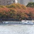 秋色の隅田川を行く東京水辺ラインこすもす