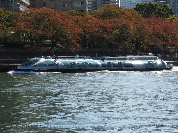 秋色の隅田川を行くTOKYO CRUISEホタルナ