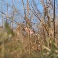 Photos: 小さな種をついばむ