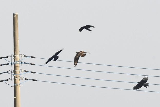 Photos: 仲良く飛んでます・・?