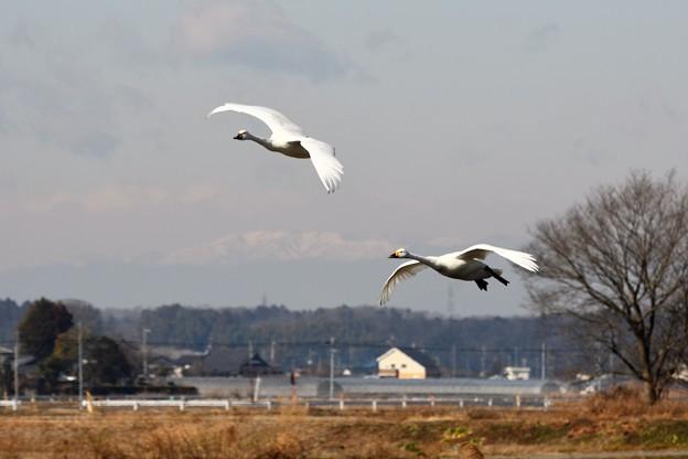 冬景色を飛ぶ