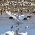 Photos: 白い鳥たち