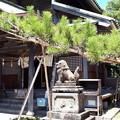 Photos: 2018.8.14(山口県/萩/円政寺/お世継ぎ松)