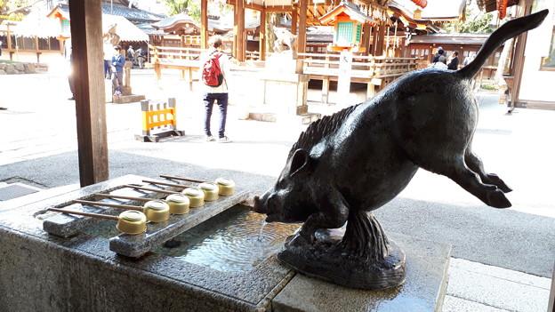 Photos: 2018.11.11(京都/上京区/護王神社/手水舎 幸運の霊猪)