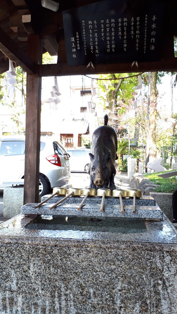 2018.11.11(京都/上京区/護王神社/手水舎 幸運の霊猪2)
