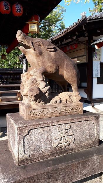 2018.11.11(京都/上京区/護王神社/霊猪像)