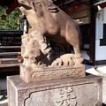 Photos: 2018.11.11(京都/上京区/護王神社/霊猪像)