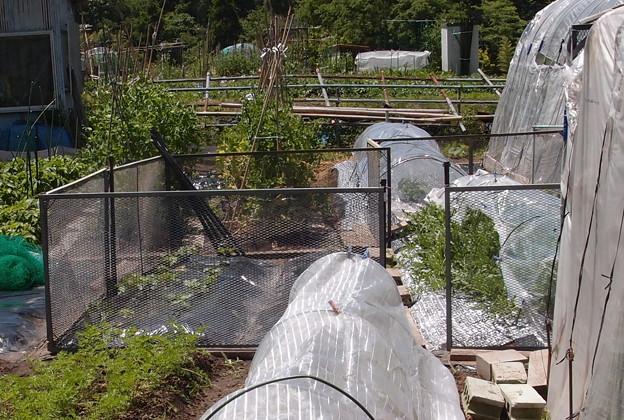 2018-05-25西瓜防護柵
