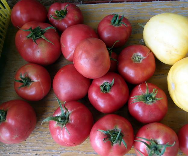 2018-06-22収穫‐トマト