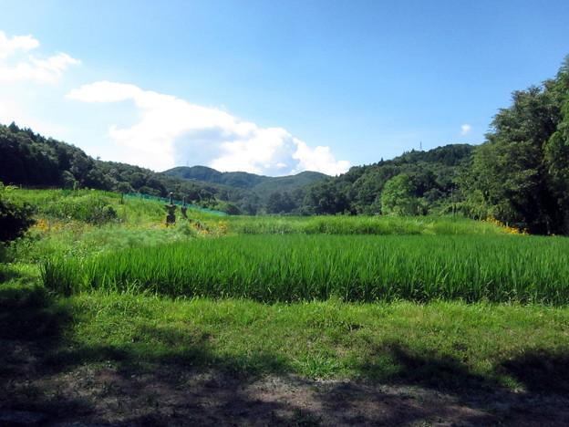 2018-07-23神社から山の畑方面