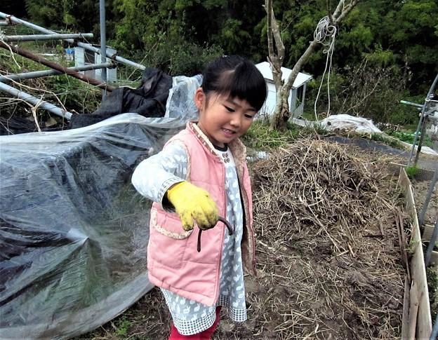 芋掘り-かんな-ちゃん (2)