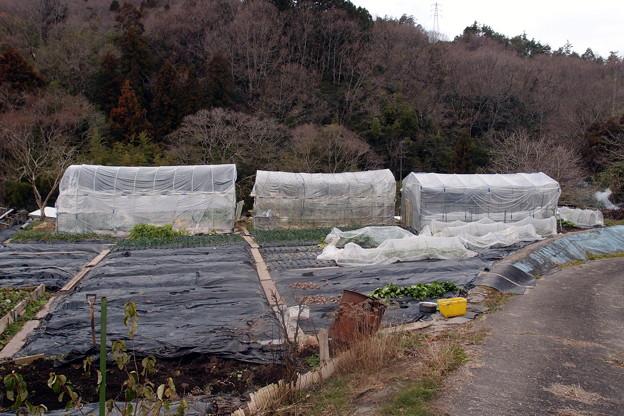 2019-01-07-畑風景