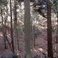 2019-01-19てっぽうの木