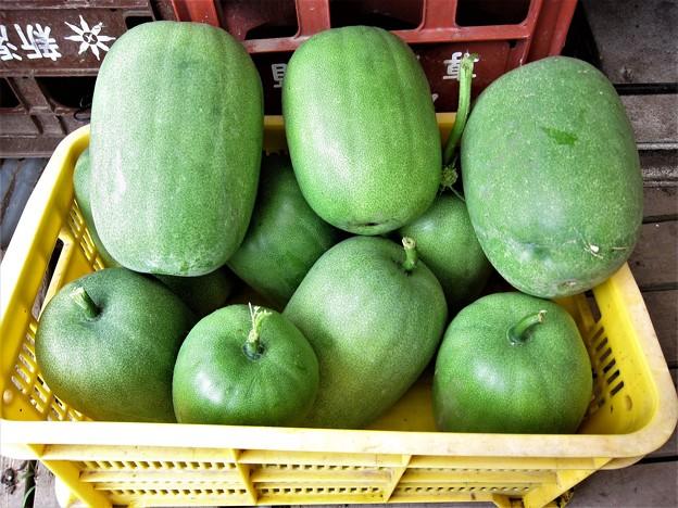 2019-09-30冬瓜11個収穫