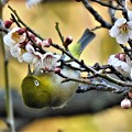 Photos: 2020-02-24-mejiro-04