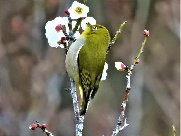 Photos: 2020-02-24-mejiro-07