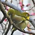 Photos: 2020-03-02-mejiro01
