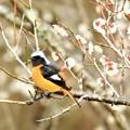 Photos: 2020-03-03-jyoubitaki-04