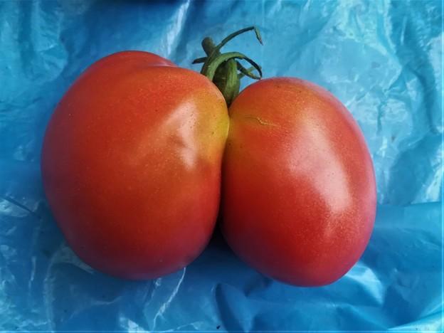 2020-07-17-双子トマト1