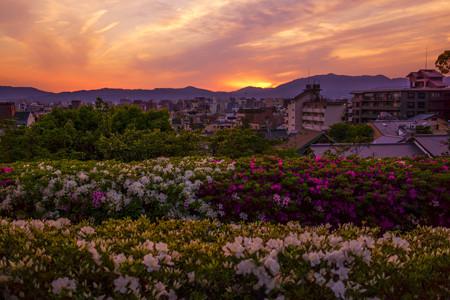 高台寺公園からの夕日