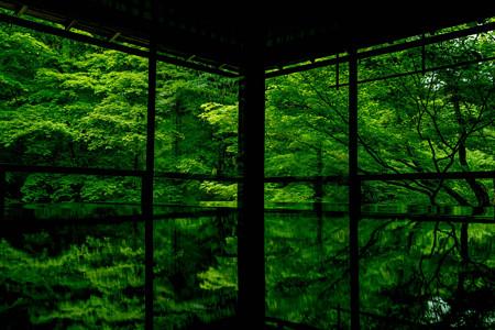 瑠璃光院 新緑1